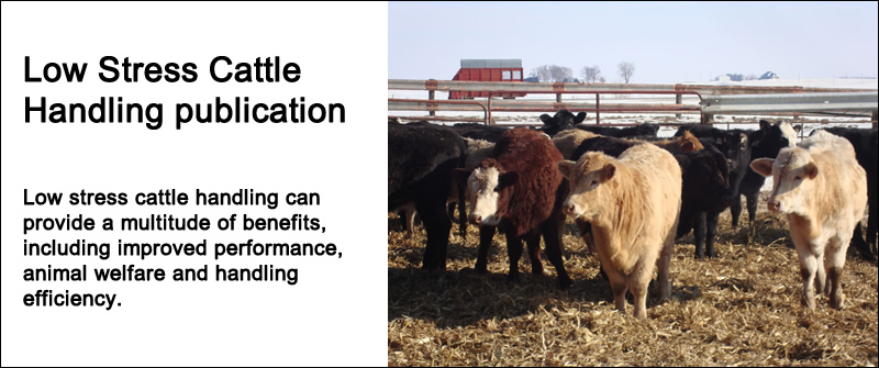 Low Stress Cattle Handling publication