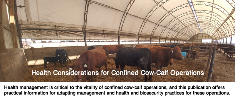cow calf operations
